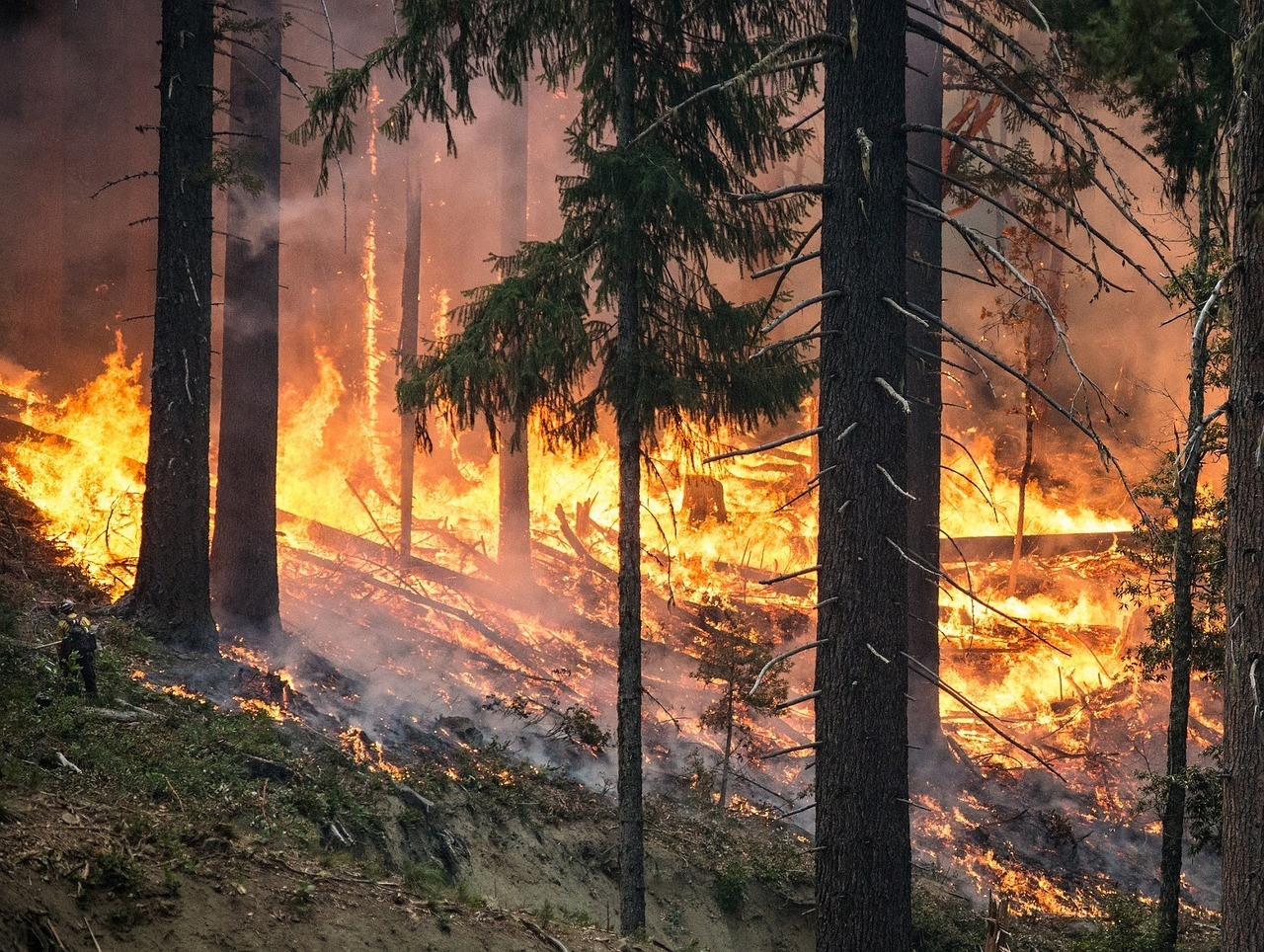 forest fire in oregon
