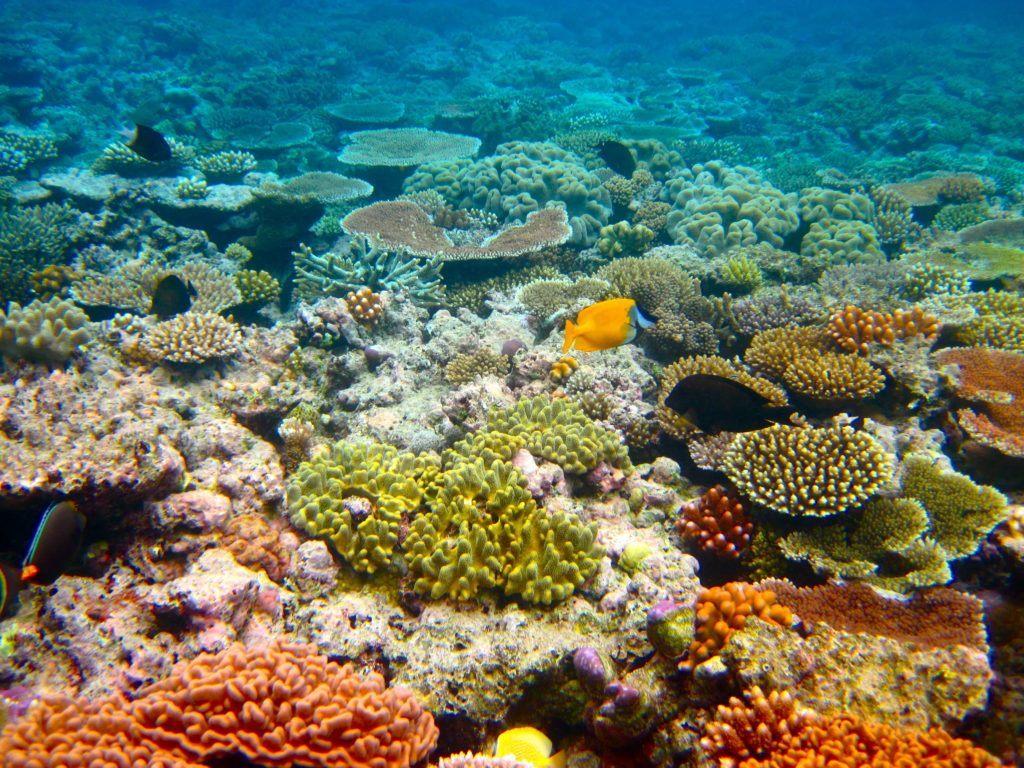 great barrier reef visit cairns