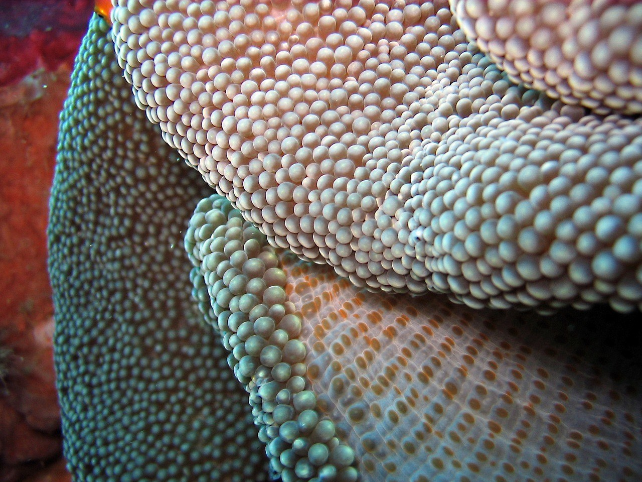 macro of coral dive photography o