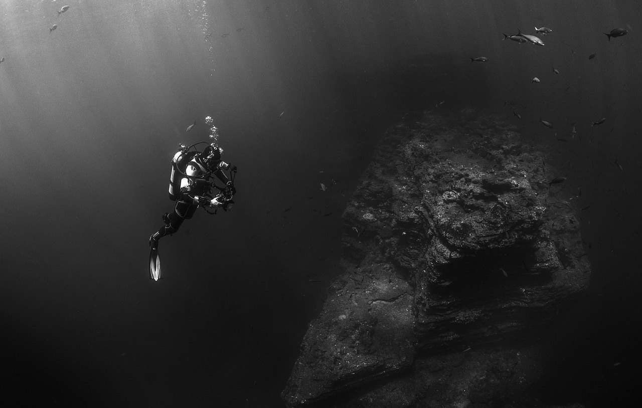 scuba diver with school of fish black and white