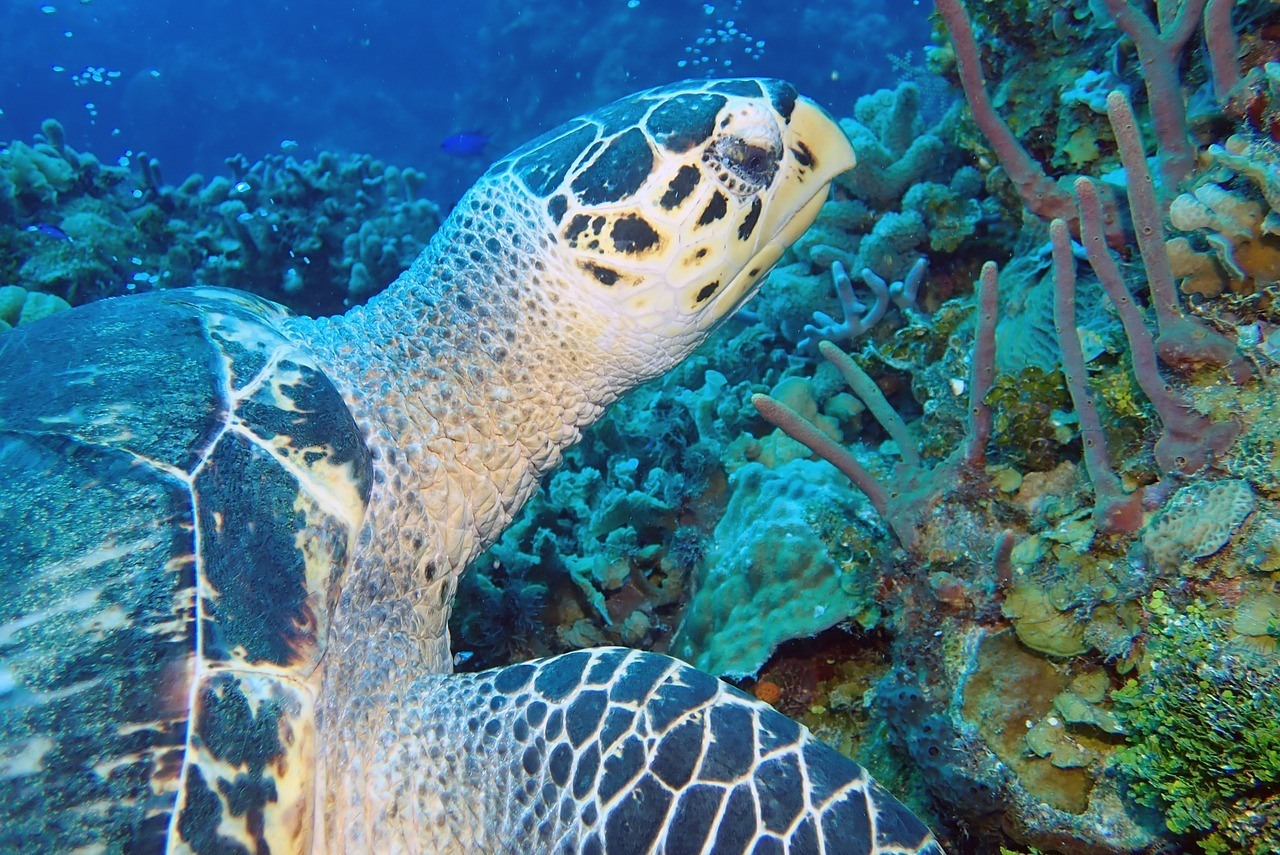 sea turtle underwater photography
