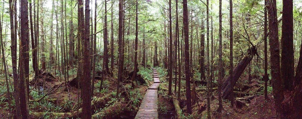olympic national park boardwalk in the woods west coast road trip