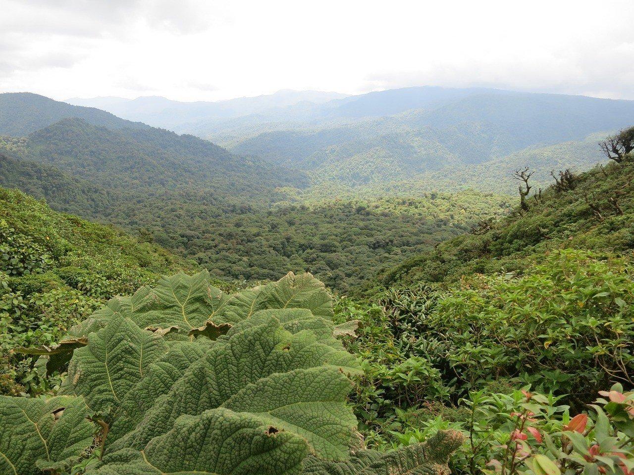 Best Hostels in Monteverde