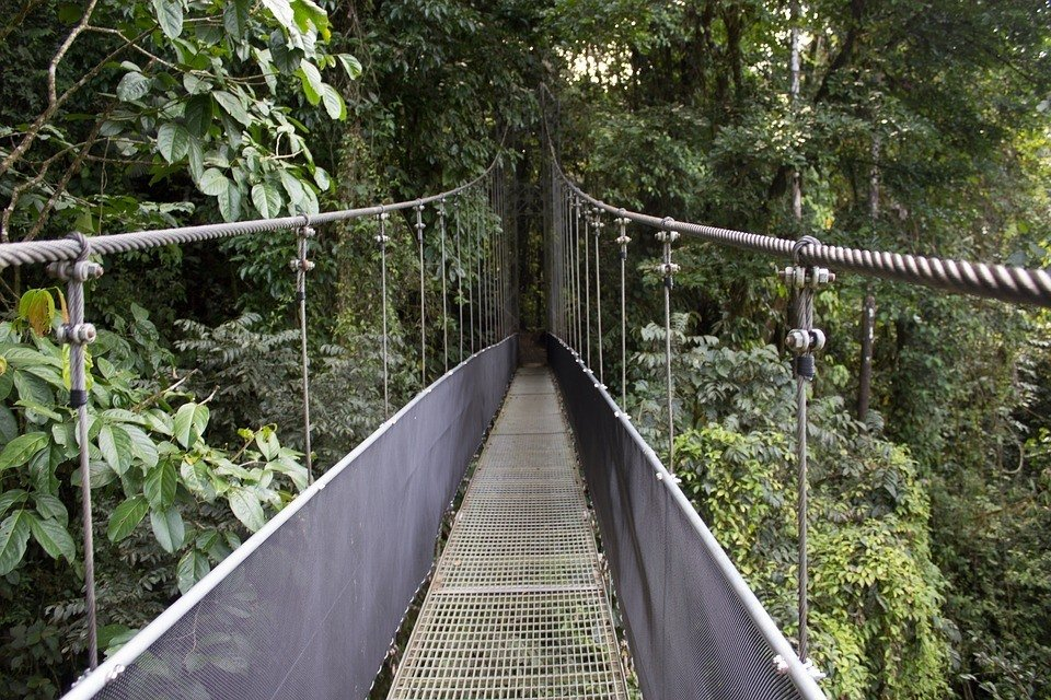 bridge in costa rica jungle