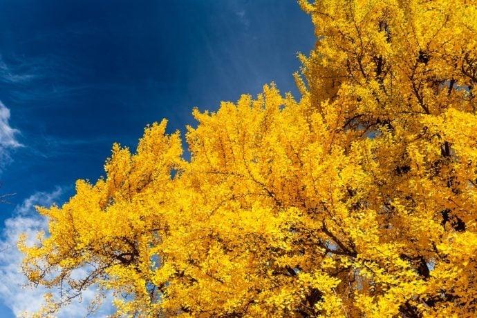autumn colors in boston