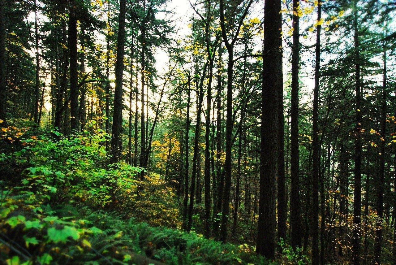 portland oregon travel guide forest park