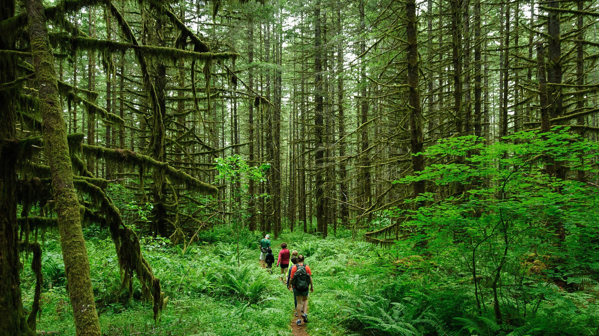 hiking in woods best oregon hikes