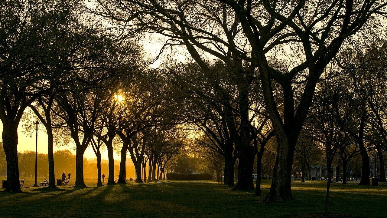 park at sunrise in washington dc, usa