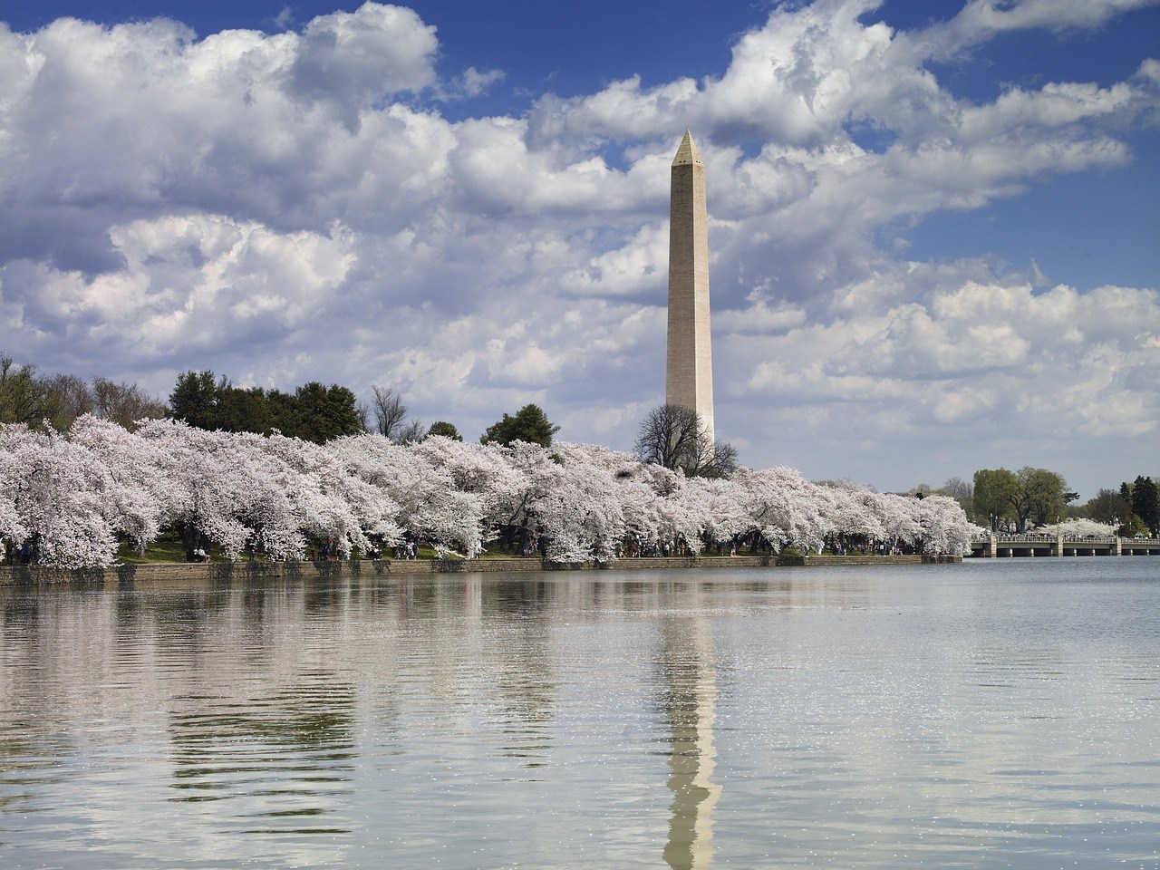 washington monument by river with blooming trees