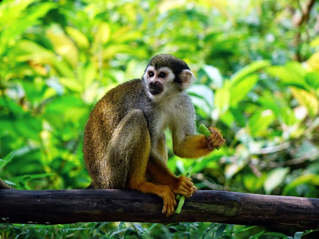 World of Birds Wildlife Sanctuary and Monkey Park1