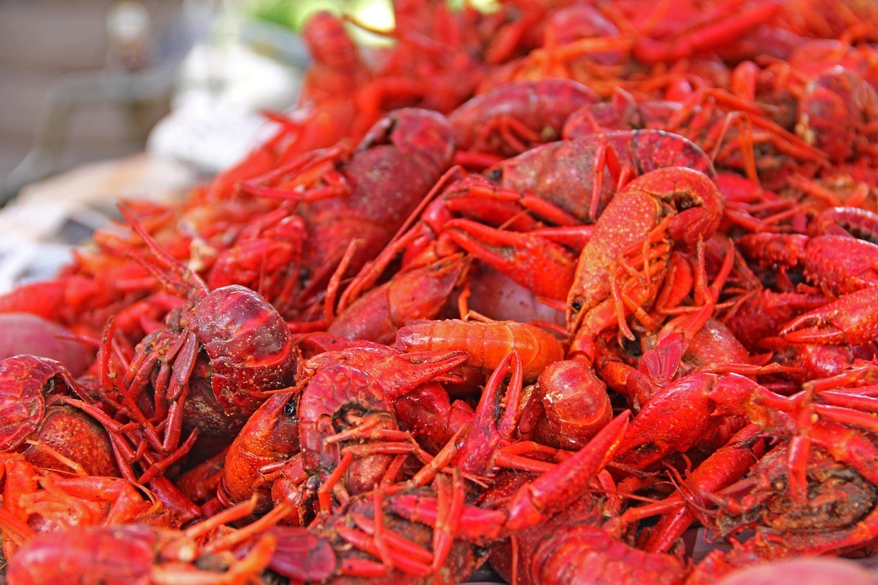 crawfish in new orleans where to eat