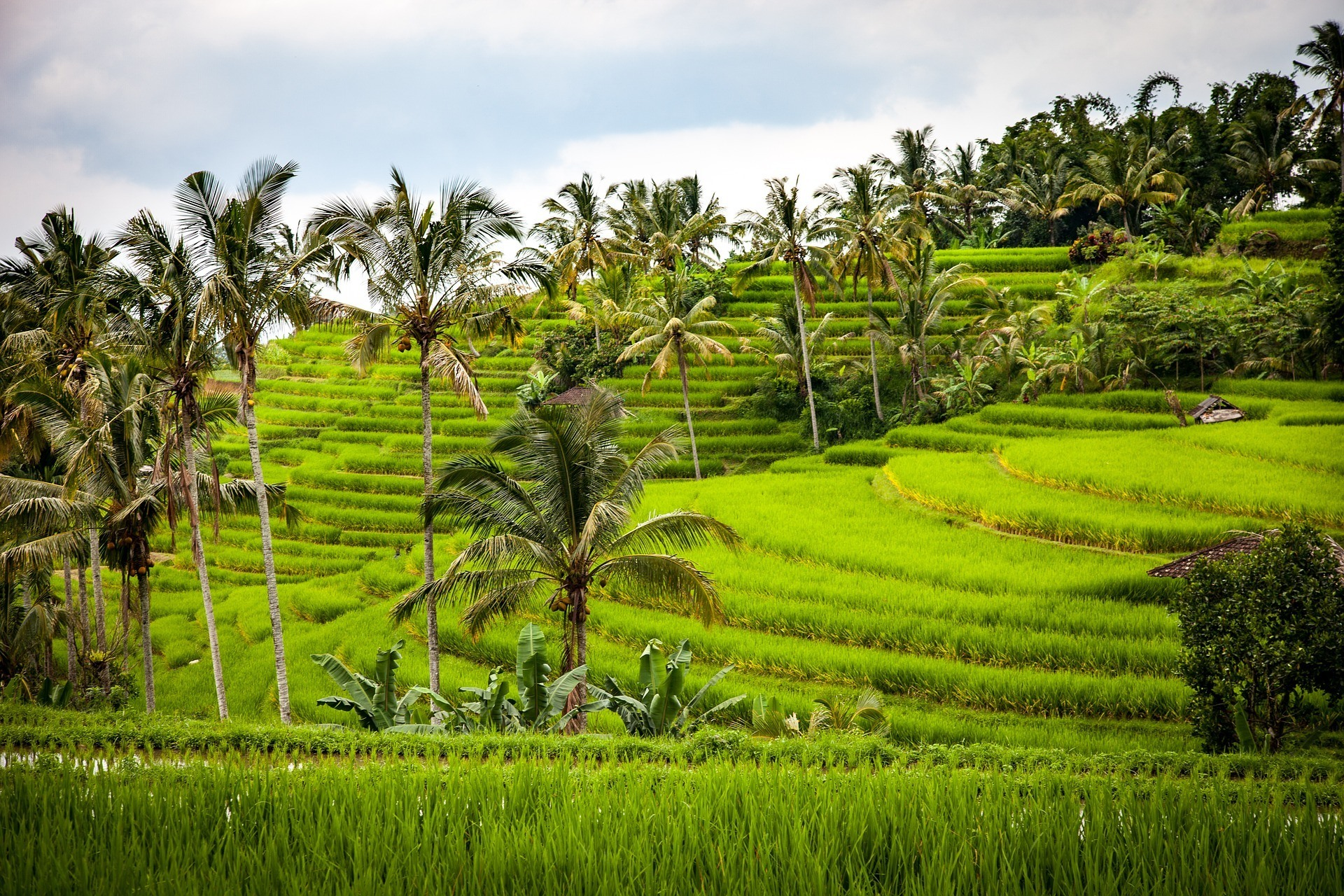 safety tips for traveling in bali rice paddies