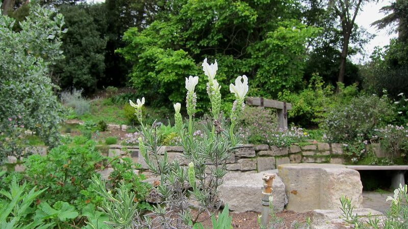 Garden of Fragrance