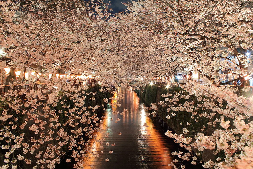 Meguro - The Best Place to Stay in Tokyo for Cherry Blossoms