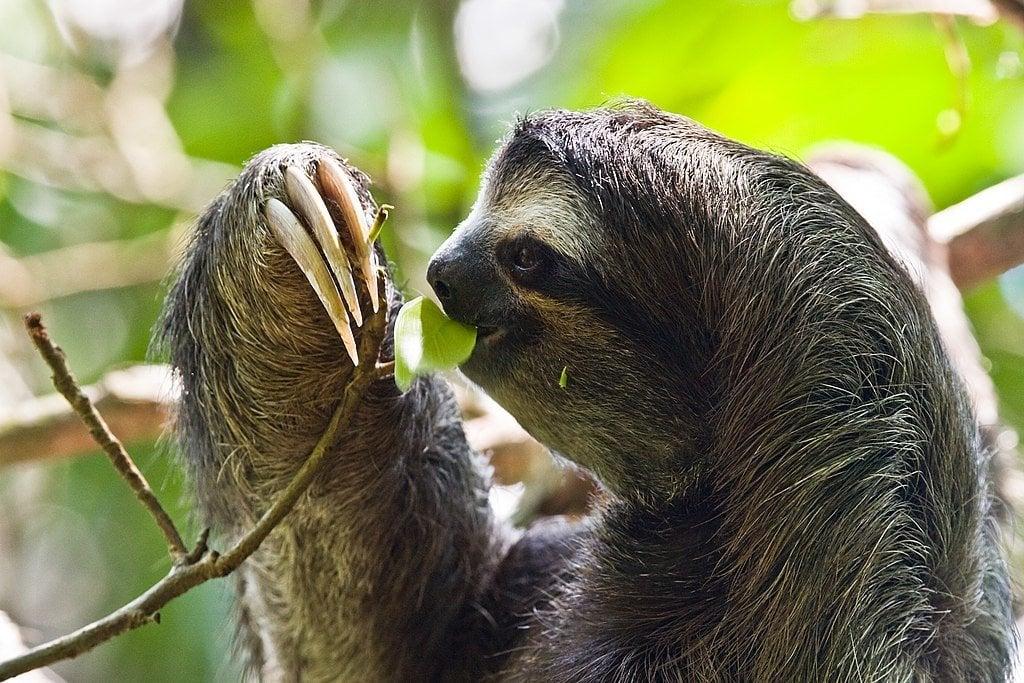 Cahuita Sloth and Wildlife Sanctuary