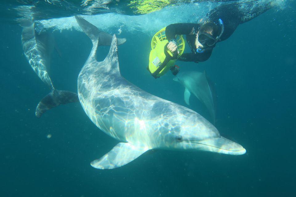 Wild Dolphin Swim and Cruise Day Trip