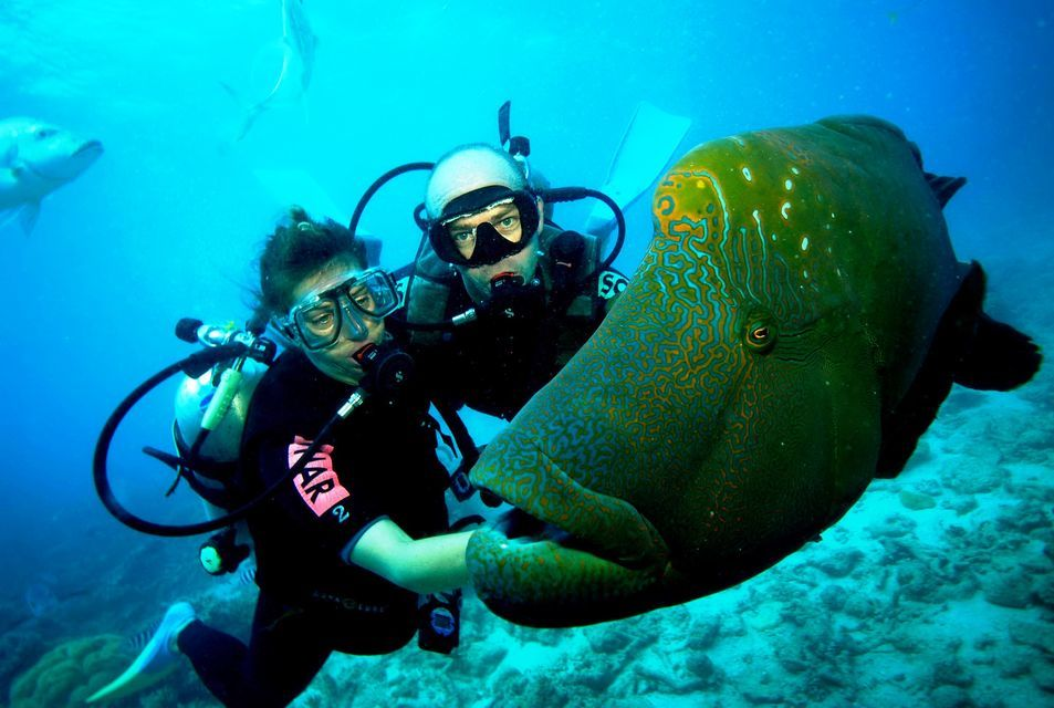 Scuba divers in New Zealand approach a fish. The fish is in the foreground of the image.