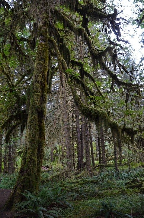 Olympic Peninsula - an awesome hiking place in the USA