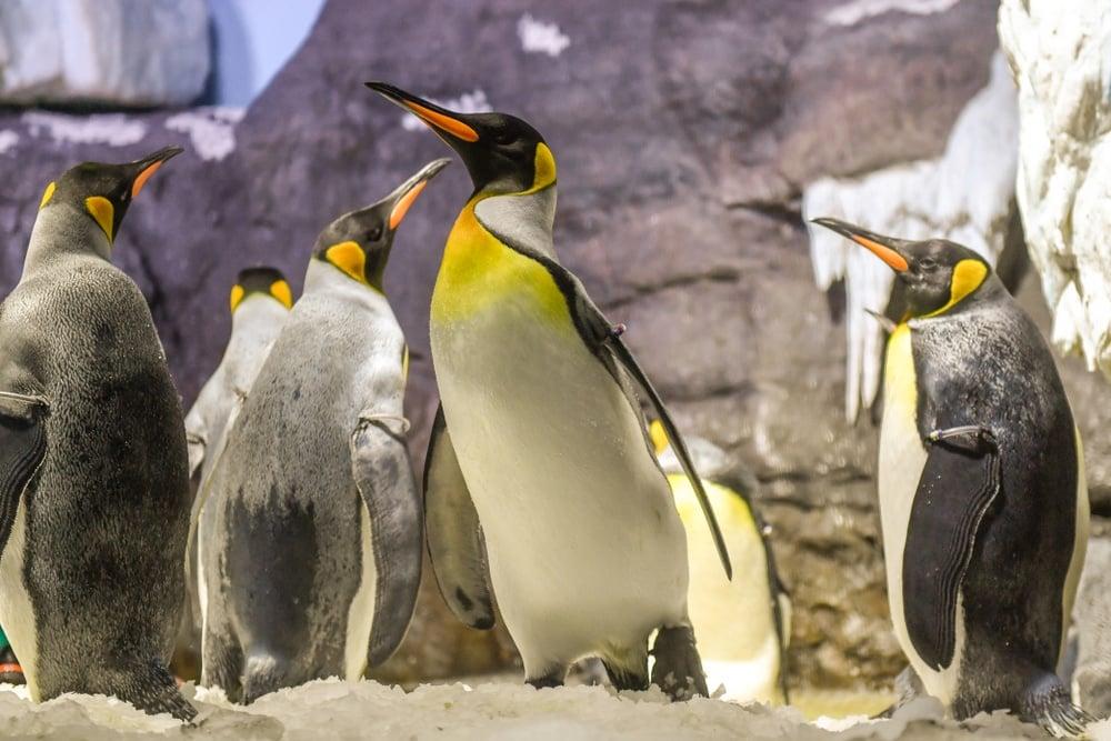 Penguin exhibit at Osaka Aquarium Kaiyukan