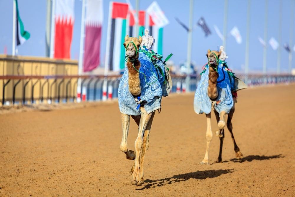 Al Marmoom Desert Conservation Reserve, Dubai