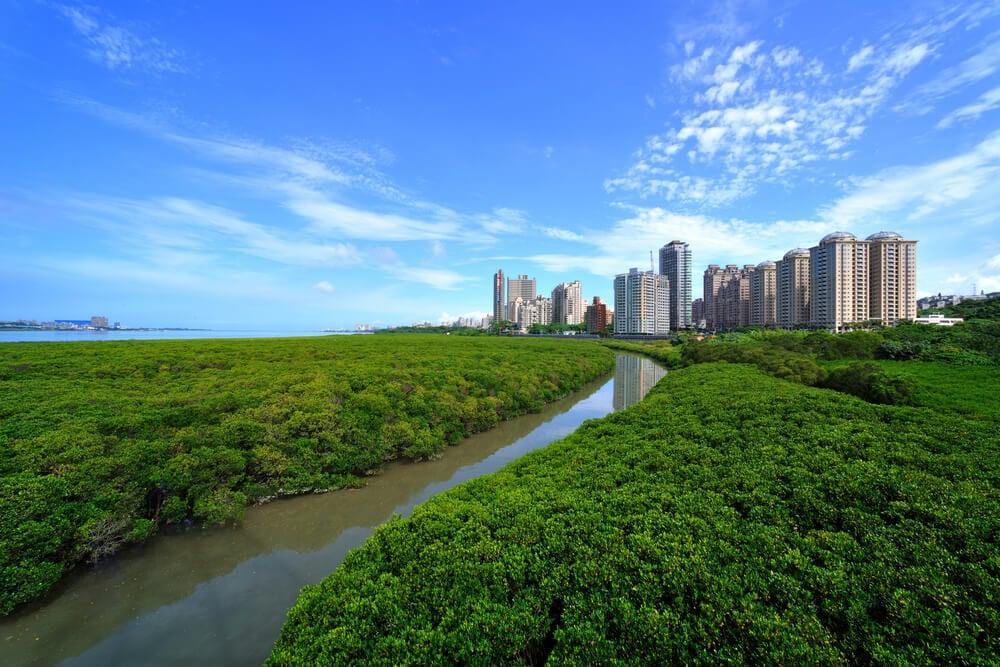 Danshui River Mangrove Nature Reserve