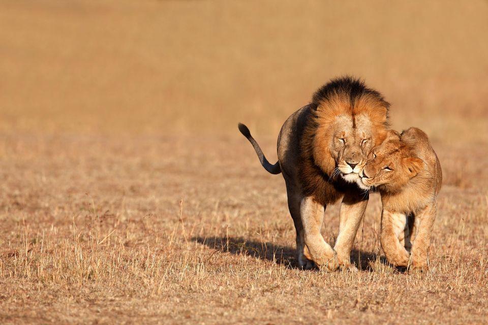 Full-Day Inverdoorn Reserve Safari from Cape Town