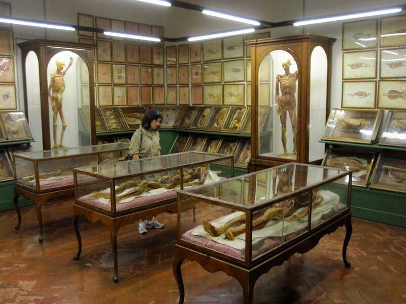 La Specola Anatomical Collection