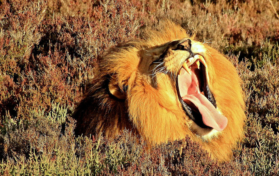South African Wildlife and Safari Two-Day Tour from Cape Town