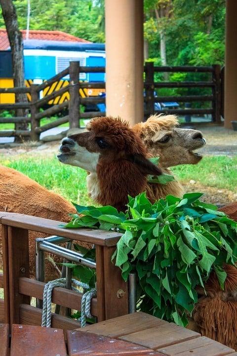 Taipei Zoo - Taipei Zoo Awesome place to visit in Taipei with kids