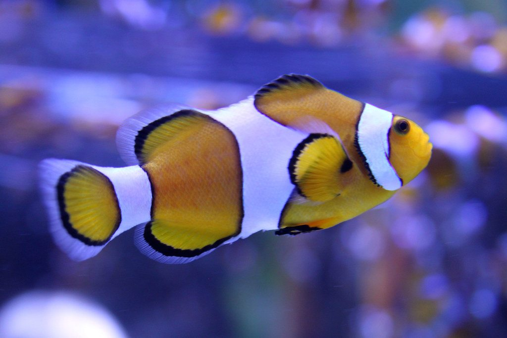 flickr-capetown-fish