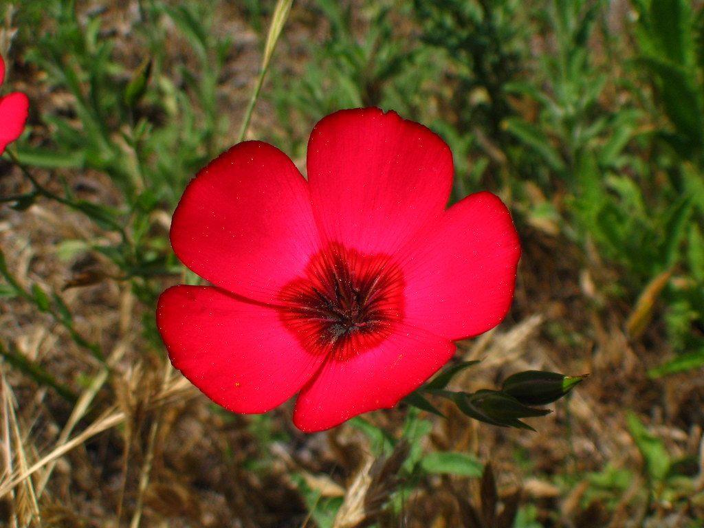 flower, los angeles