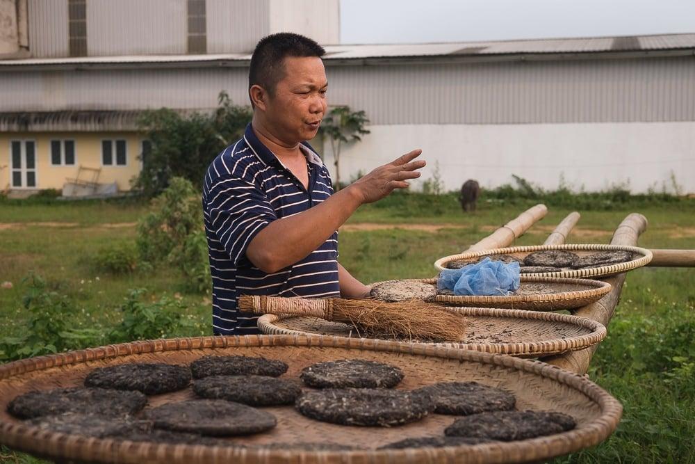 volunteering in vietnam tea plantation