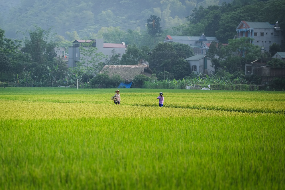 vietnamese rice paddy and villagers