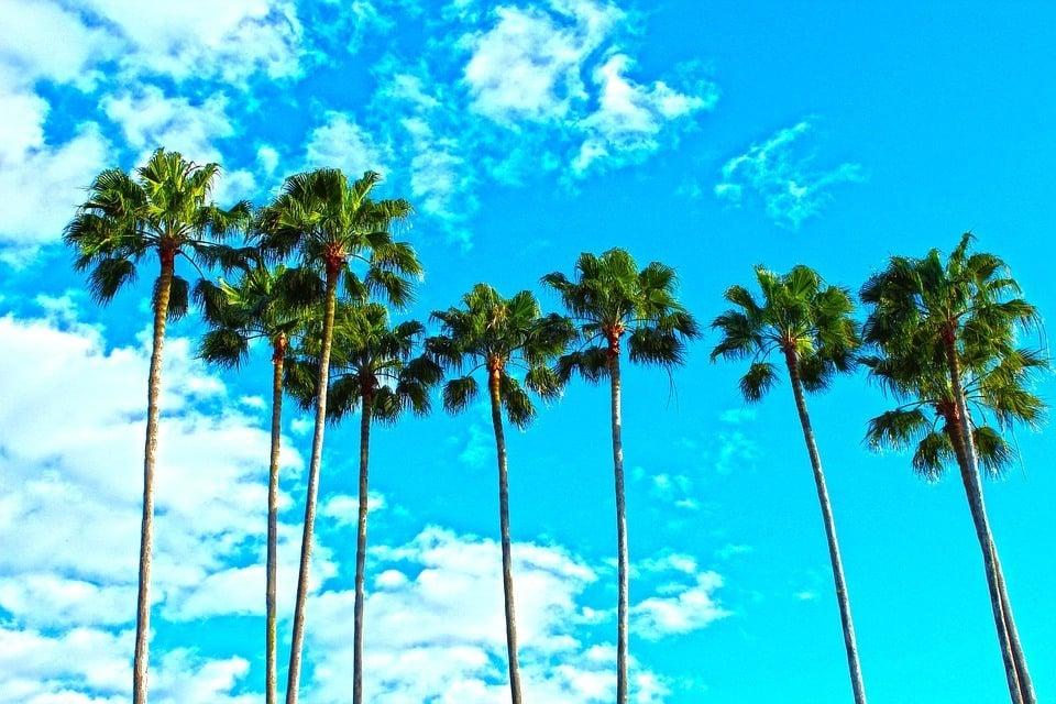 Florida in Summer