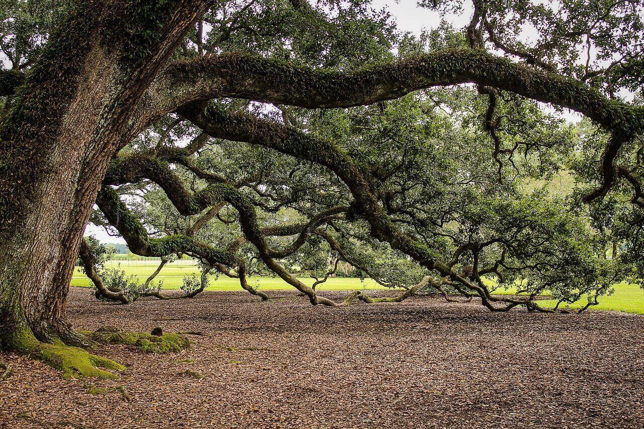 Oaks of New Orleans