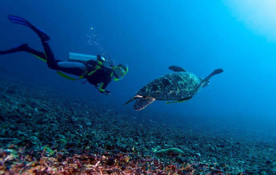 Scuba Diving in Sekotong The Macro Paradise