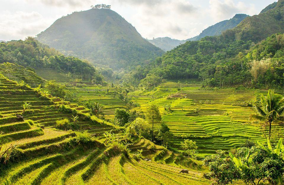 Selogriyo Temple Tour and Trek Through Java's Rice Terraces