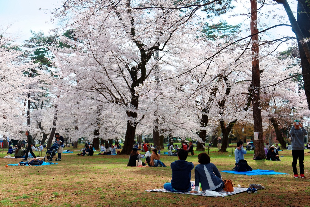 A safe traveling family in Japan enjoying the cherry blossoms