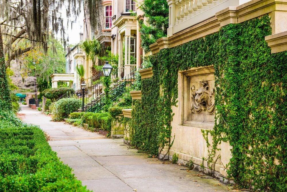 Starland, Savannah