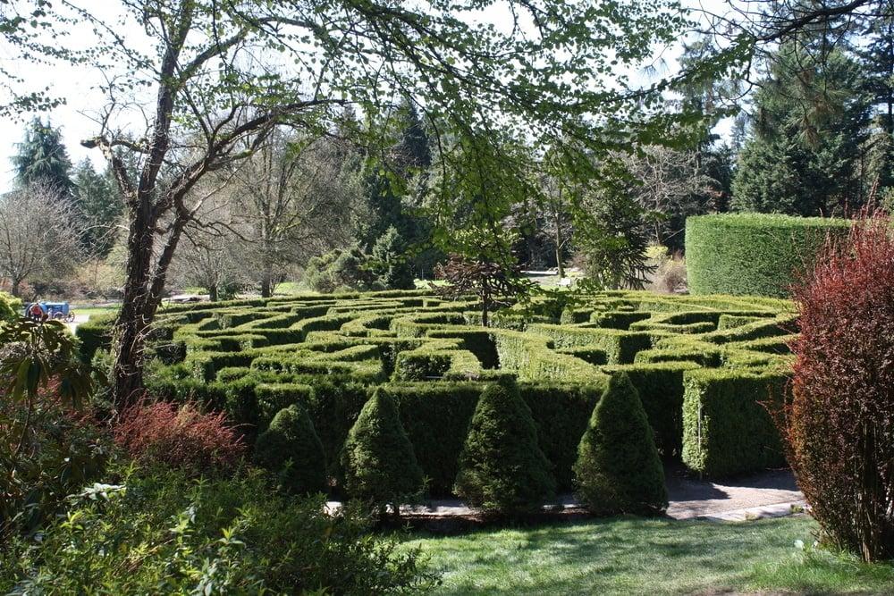 VanDusen Garden's Elizabethan Hedge Maze