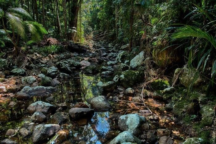 Repentance Creek near Minyon Falls