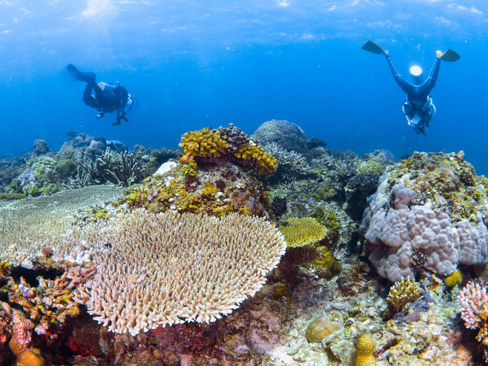 Coral Garden site while diving in Eilat