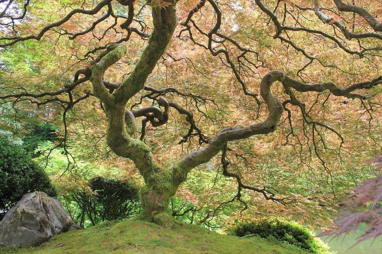 flickr-portland-garden