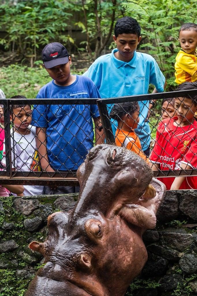 flickr-yogyakarta-zoo
