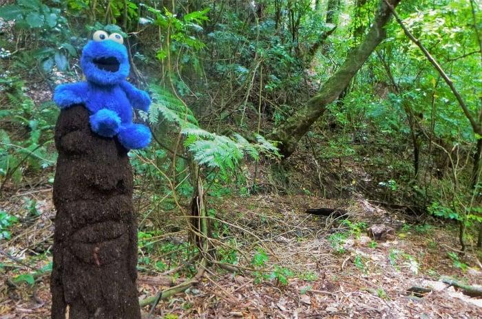 Walking in the forest of Otari Wilton Bush