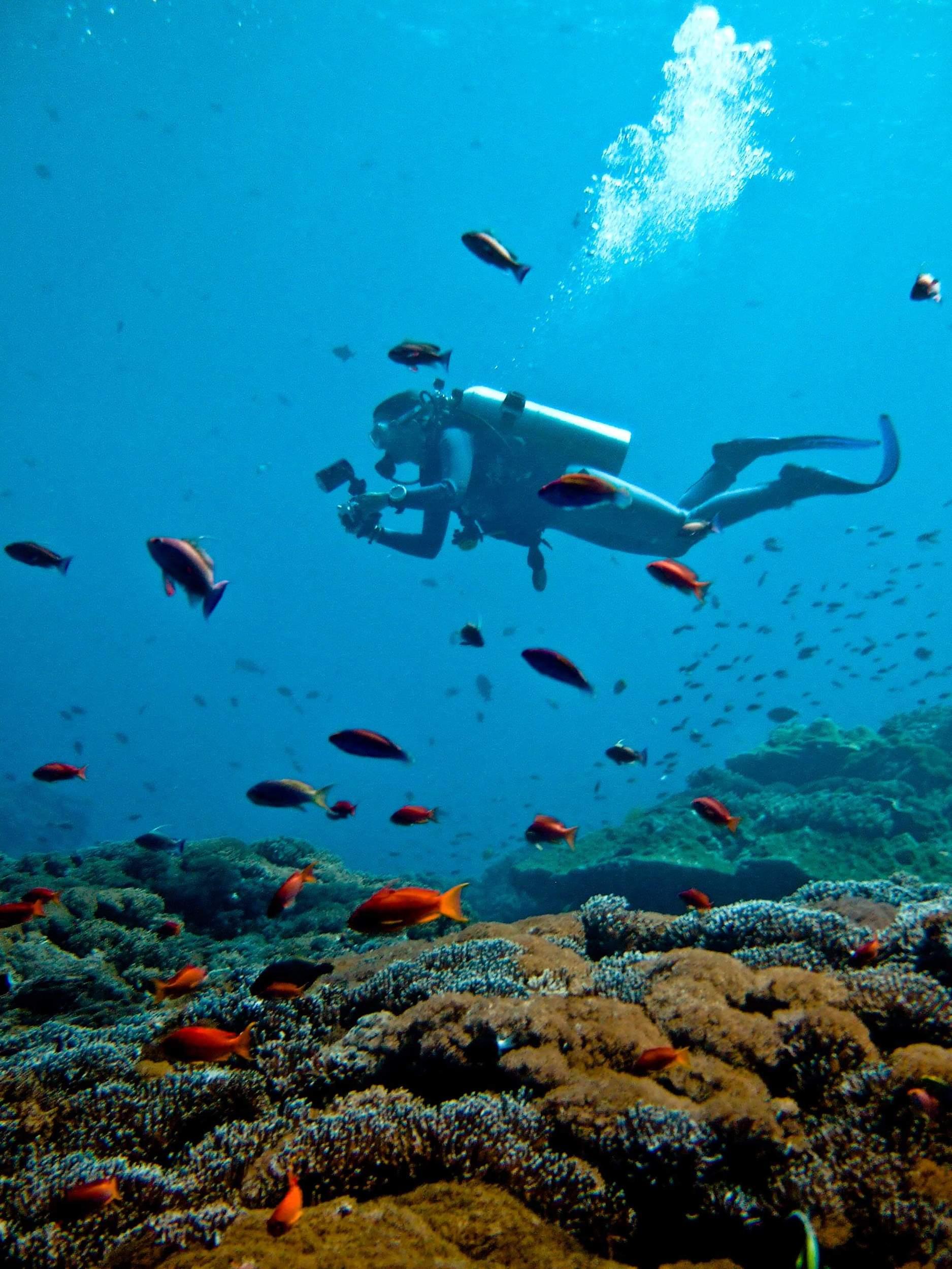 diving around nusa lembongan