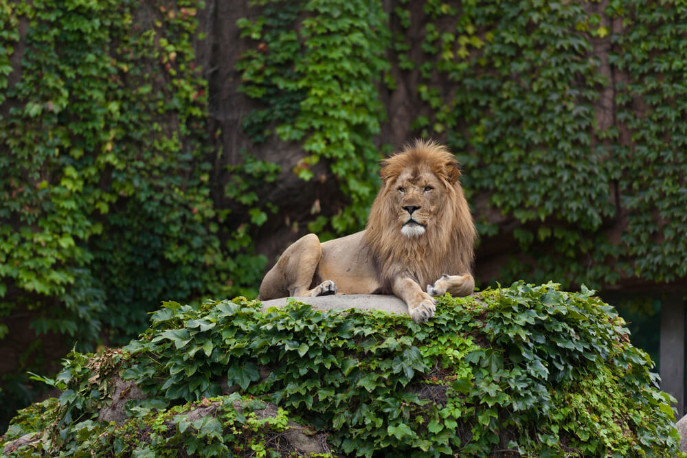 Check Out Wild Animals at Lincoln Park Zoo