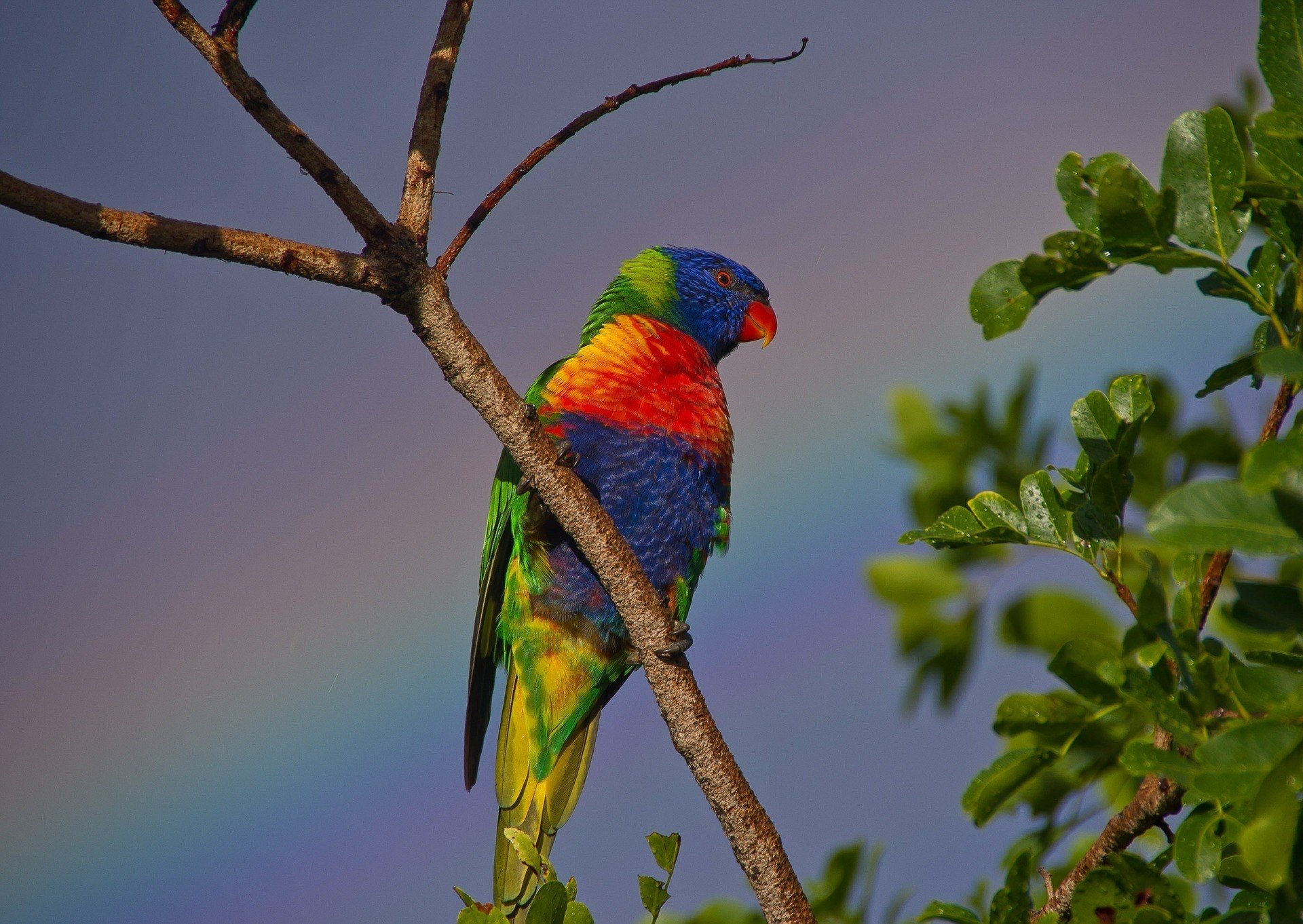Currumbin Wildlife Sanctuary, Gold Coast