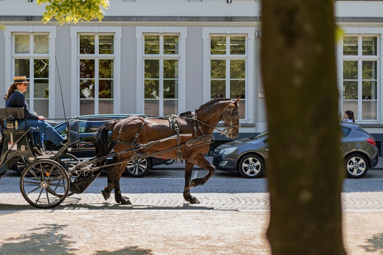 Experience the City from a Horse-drawn Carriage