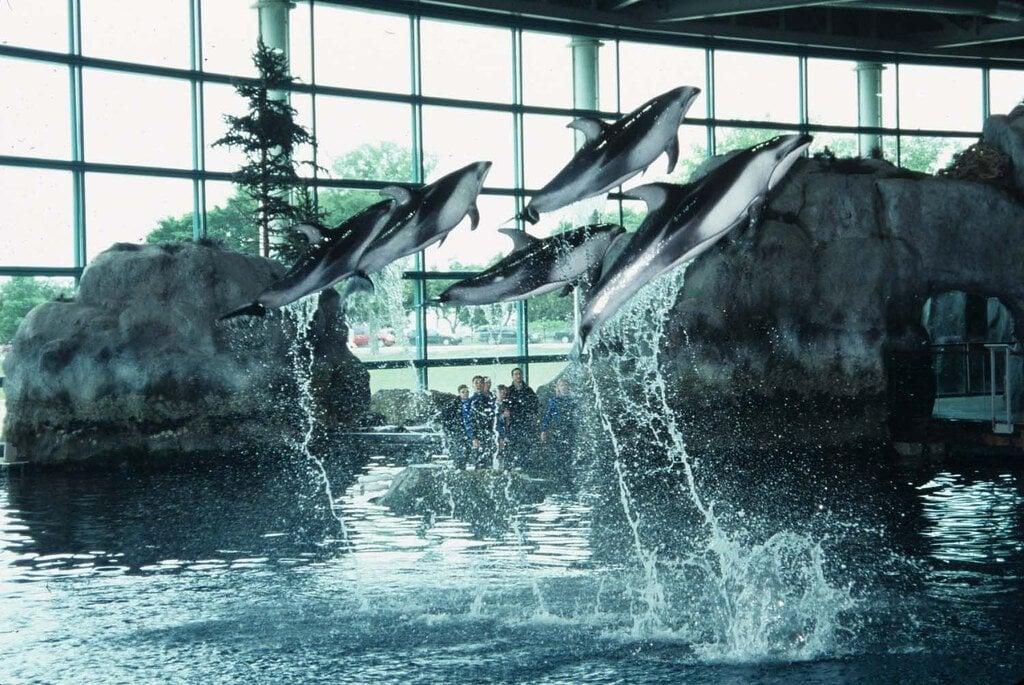 Get Up Close to the Aquatic Wildlife of Shedd Aquarium